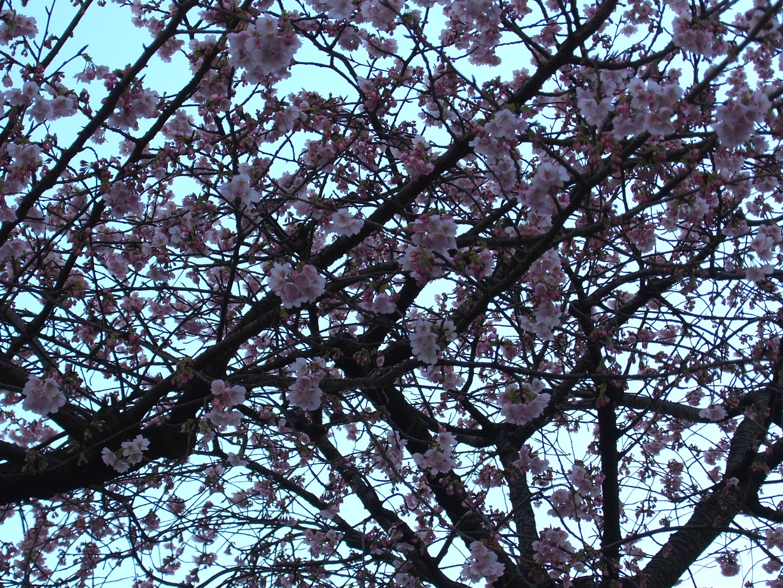 桜木町スナップ写真。ふらっとしたデートのご参考にどうぞ(2)