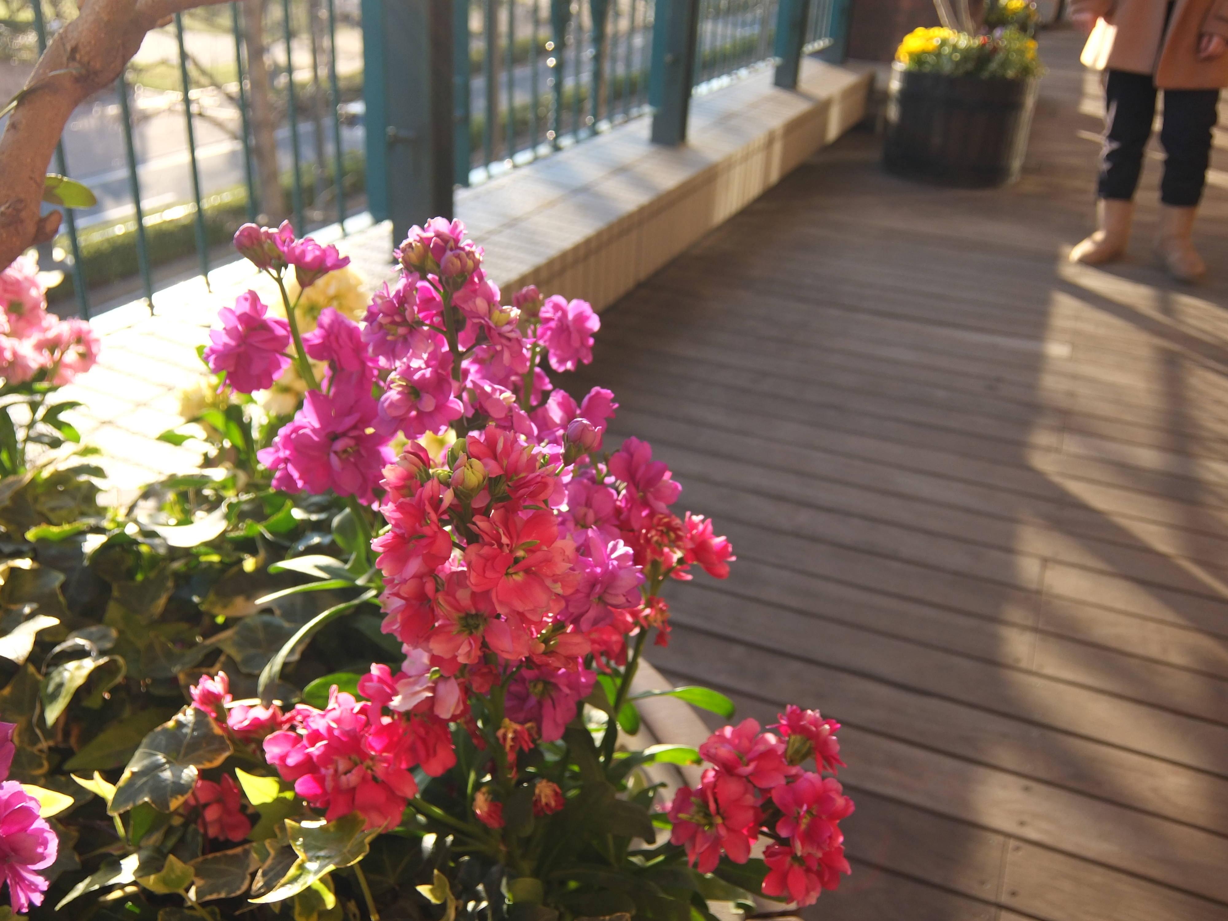 桜木町スナップ写真。ふらっとしたデートのご参考にどうぞ(12)